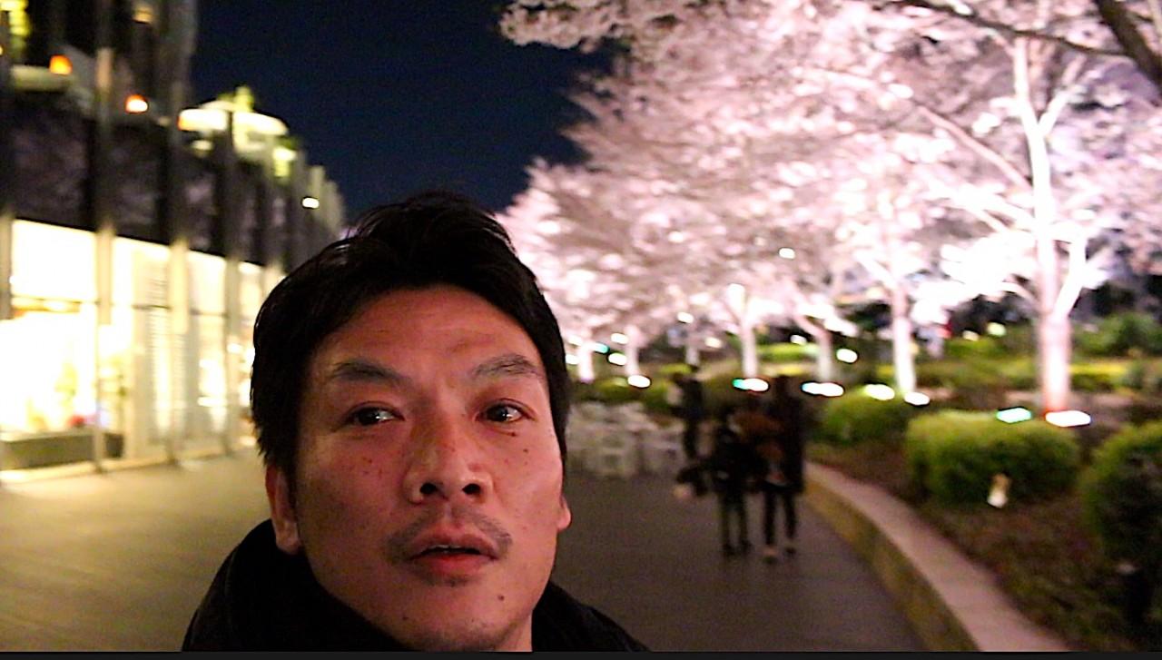 六本木ミッドタウンへ、夜桜見に行ってきました^^